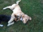dog park Newton MA Massachusetts New Off Lease Dog Parks