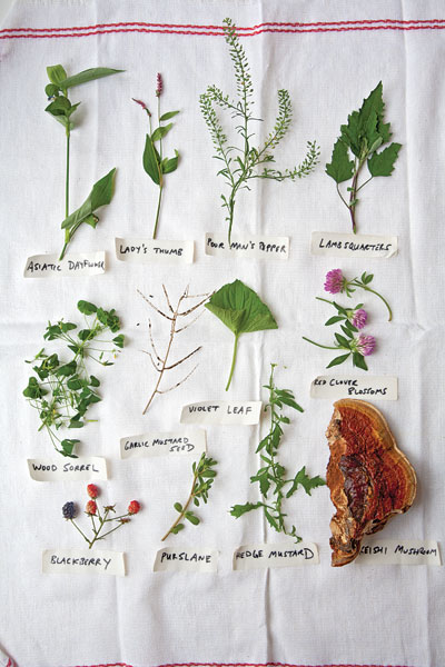 Saveur Magazine Eternal Spring foraging in parks I Love Newton MA